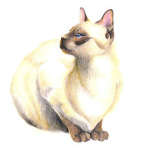Skizze, Portrait, Katze, Tiere