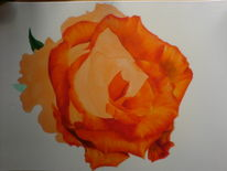 Orange, Natur, Rose, Blumen