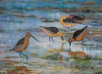 Ölmalerei, Pfuhlschnepfen, Vogel, Tailed godwit