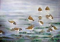 Vogel, Sandregenpfeifer, Meer, Watt