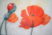 Stillleben, Blumen, Malerei, Mohn