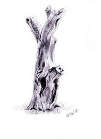 Zeichnung, Zeichnungen, Pflaume