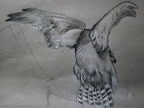 Zeichnung, Greifvogel, Vogel, Flügel