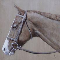 Tiere, Klassisch, Augen, Pferde