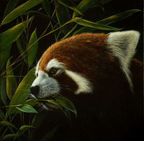 Red panda, Wildlife, Realismus, Gemälde