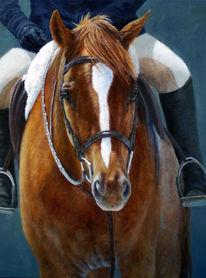 Hübsche, Pferde, Traum, Realismus