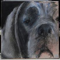 Dogge, Zeichnung, Pastellmalerei, Portrait