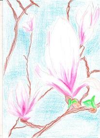 Landschaft, Zeichnung, Zeichnungen, Magnolien