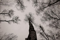 Abstrakt, Digital, Digitale kunst, Wald