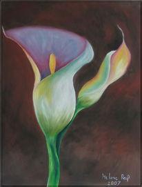 Palustris, Calla, Blumen, Zantedeschien