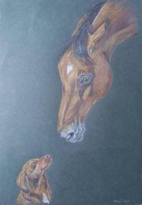 Pferde, Hund, Portrait, Zeichnungen
