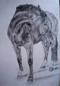 Tierportrait, Zeichnung, Zeichnungen, Blick