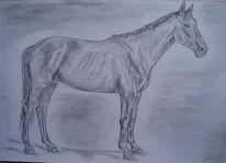 Tierportrait, Zeichnungen