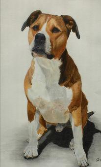Zeichnung, Portrait, Zeichnungen, Hundeportrait