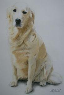 Zeichnungen, Portrait, Hundeportrait