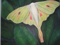 Schmetterling, Malerei, Blätter