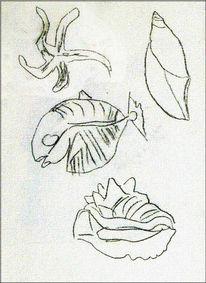Skizze, Zeichnung, Fossilien, Ammonit