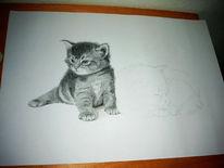Katze, Zeichnung, Buntstiftzeichnung, Zeichnungen
