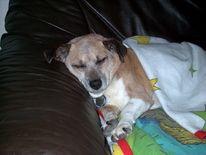 Traum, Hund, Schlaf, Pinnwand