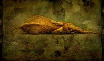 Stillleben, Schlaf, Ruhe, Elefant