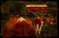 Fotografie, Bauernhof, Warten, Stillleben