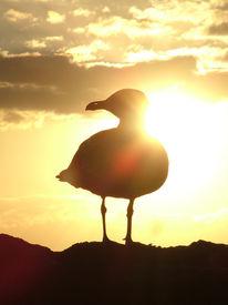 Gold, Spanien, Insel, Sonnenuntergang