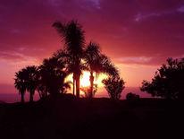 Palmen, Rot, Spanien, Landschaft