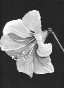Lilie, Malerei, Schwarz weiß