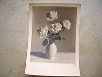 Postkarte, Blumen, Abstrakt, Fotografie