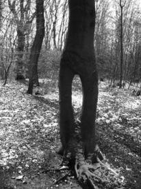 Baum, Fotografie, Natur, Landschaft