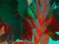 Fotografie, Blumen, Stillleben, Natur