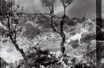 Ziegen, Schwarz weiß, Reise, Marokko