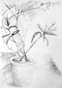Pflanzen, Vase, Bleistiftzeichnung, Stillleben