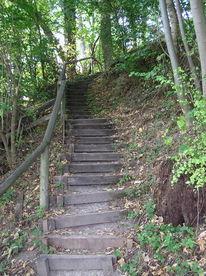 Wald, Landschaft, Treppe, Grün