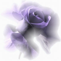 Digital, Blumen, Rose, Violett