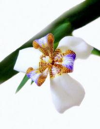 Blüte, Orchidee, Fotografie