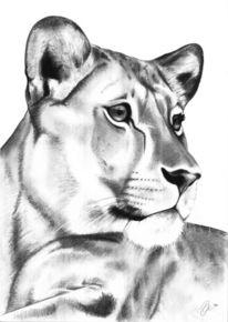 Zeichnung, Portrait, Zeichnungen, Löwin