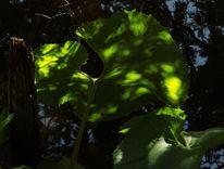 Licht und schatten, Spiegelung, Blätter, Blattgrün