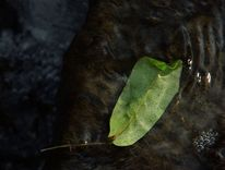 See, Spiegelung, Grün, Blätter