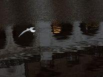 Spiegelung, Flüchtig, Augenblick, Alsterarkaden