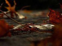 Blätter, Mauer, Spinnweben, Herbst