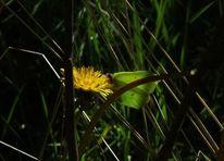 Unterholz, Dickicht, Schmetterling, Wald