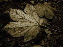 Tropfen, Herbst, Vergänglichkeit, November