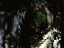Blätter, See, Zweig, Wasser