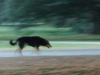 Hund, Verschwimmen, Fotografie, Unterwegs