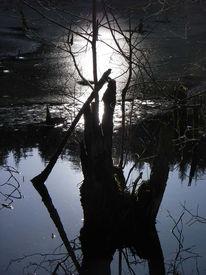 Teic, Fotografie, Winter, Natur