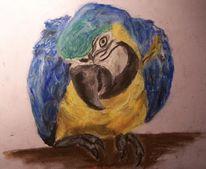 Zeichnung, Blau, Papagei, Gelb