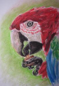 Papagei, Pastellmalerei, Malerei, Rot