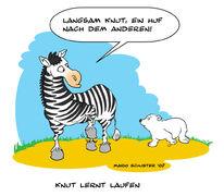 Zebra, Zoo, Berlin, Knut
