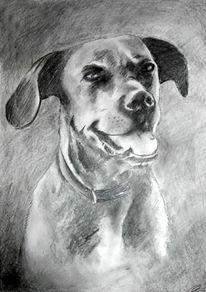 Zeichnung, Hund, Portrait, Zeichnungen